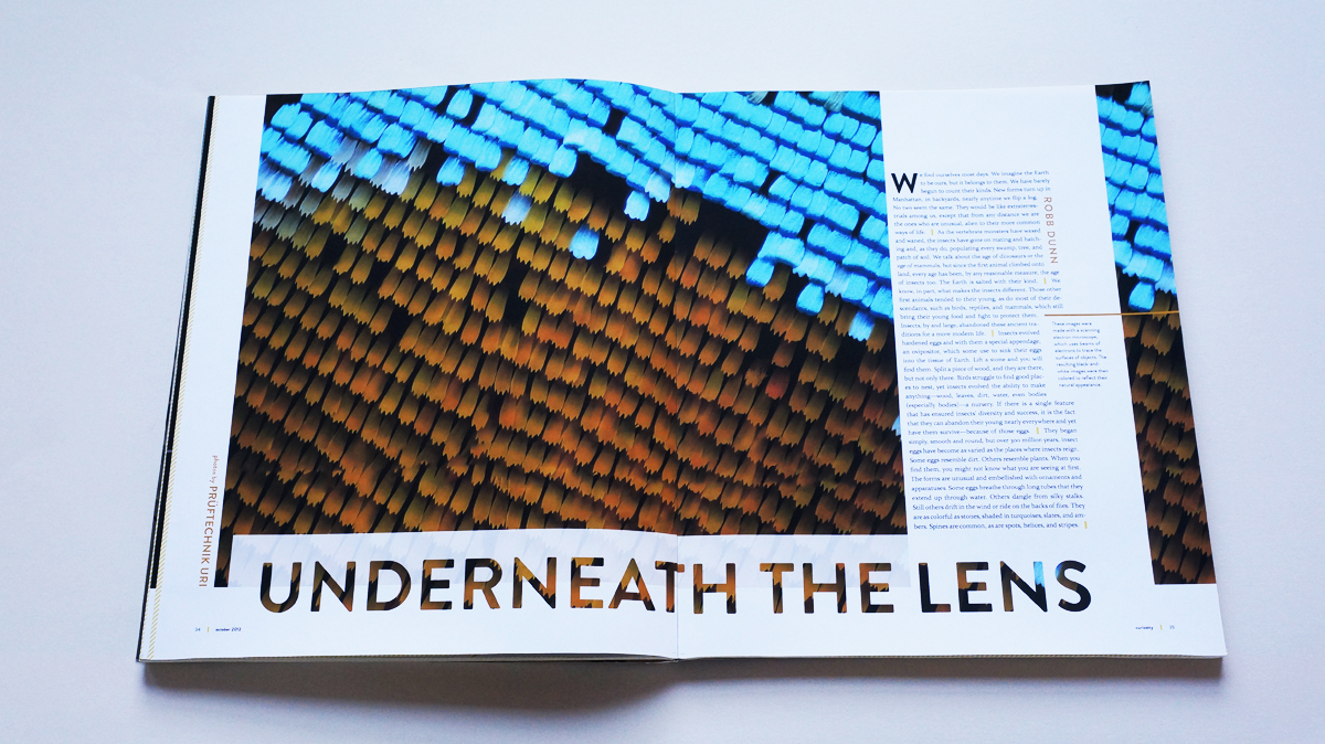 """An electron-microscope provided the full-bleed photo of a blue and brown butterfly wing at the beginning of """"Underneath the lens"""", a photo-essay about butterfly eggs."""